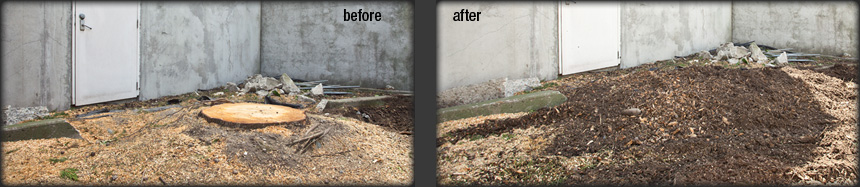 Before and after stump removal - no dump fees